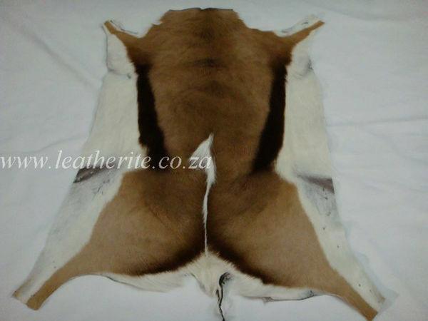 Picture of Springbok Game Furtan